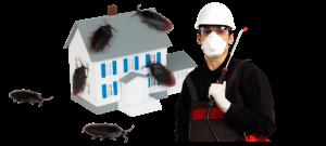 شركة مكافحة حشرات 0505754953