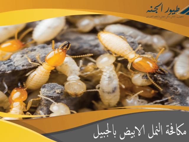 شركة مكافحة النمل الابيض بالجبيل