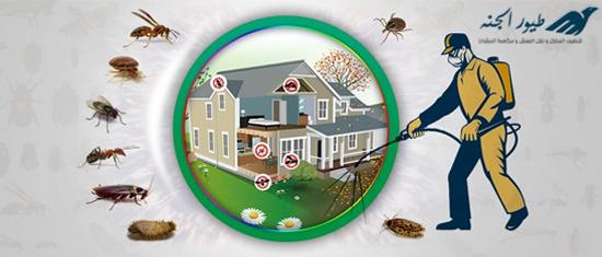 مكافحة حشرات بعجمان